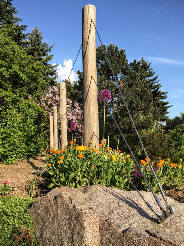 Gartengestaltung Dresden, weinspalier aus robinie - sinnesmagnet, Design ideen